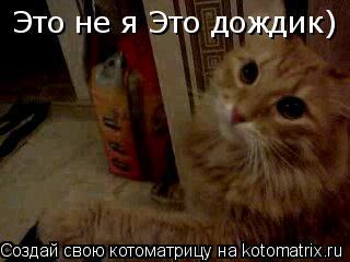 Котоматрица: Это не я Это дождик)