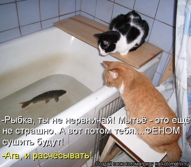 Котоматрица: -Рыбка, ты не нервничай! Мытьё - это ещё не страшно. А вот потом тебя....ФЕНОМ сушить будут! -Ага, и расчёсывать!