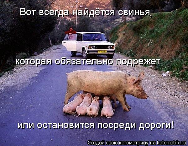 Котоматрица: Вот всегда найдётся свинья которая обязательно подрежет которая обязательно подрежет или остановится посреди дороги! ,