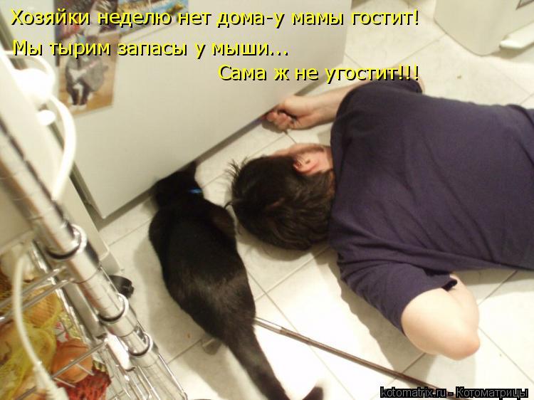 Котоматрица: Хозяйки неделю нет дома-у мамы гостит! Мы тырим запасы у мыши... Сама ж не угостит!!!