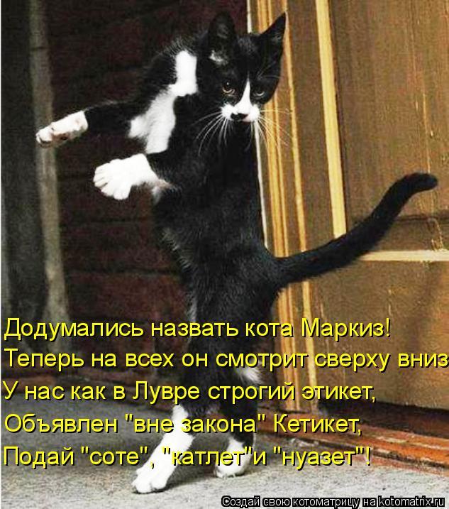 """Котоматрица: Додумались назвать кота Маркиз! Теперь на всех он смотрит сверху вниз У нас как в Лувре строгий этикет, Объявлен """"вне закона"""" Кетикет, Подай """""""