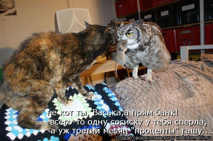 """Котоматрица: всего-то одну сосиску у тебя сперла, не кот ты, Васька,а прям банк! а уж третий месяц """"проценты"""" гашу...."""