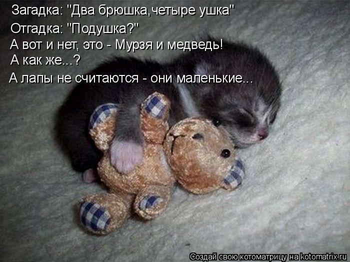 """Котоматрица: Загадка: """"Два брюшка,четыре ушка"""" Отгадка: """"Подушка?"""" А вот и нет, это - Мурзя и медведь! А как же...? А лапы не считаются - они маленькие..."""