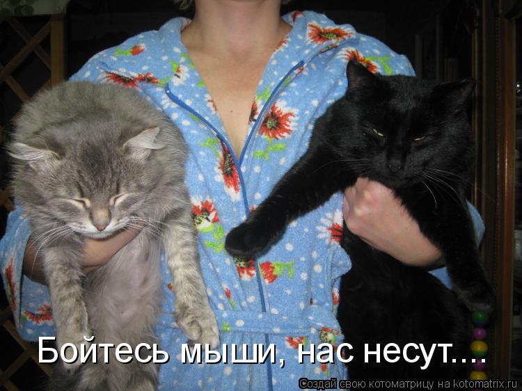 Котоматрица: Бойтесь мыши, нас несут....