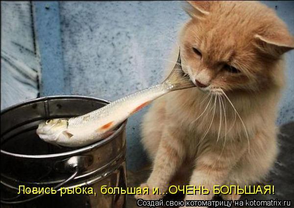 Котоматрица: Ловись рыбка, большая и...ОЧЕНЬ БОЛЬШАЯ!