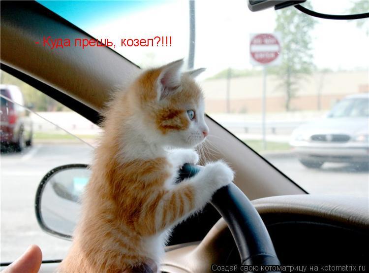 Котоматрица: - Куда прешь, козел?!!!
