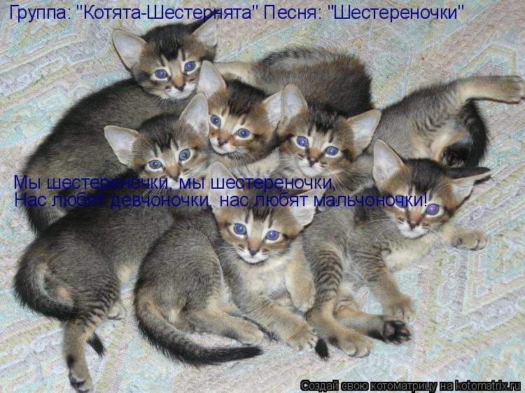 "Котоматрица: Группа: ""Котята-Шестернята"" Песня: ""Шестереночки"" Мы шестереночки, мы шестереночки,  Нас любят девчоночки, нас любят мальчоночки!"