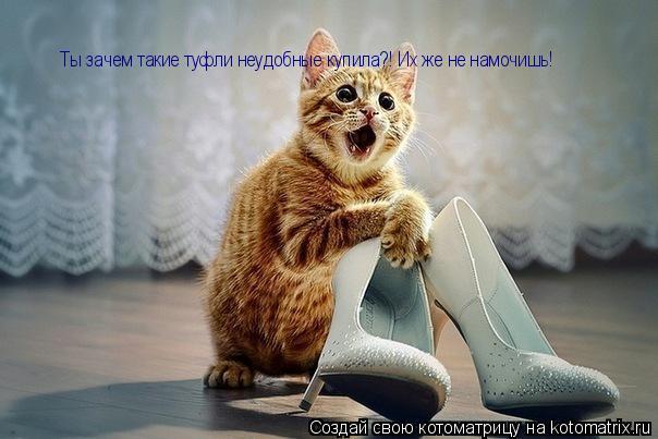 Котоматрица: Ты зачем такие туфли неудобные купила?! Их же не намочишь!