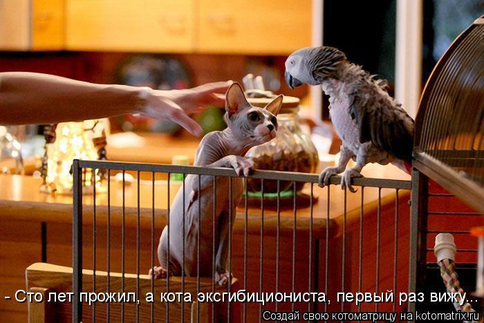 Котоматрица: - Сто лет прожил, а кота эксгибициониста, первый раз вижу...
