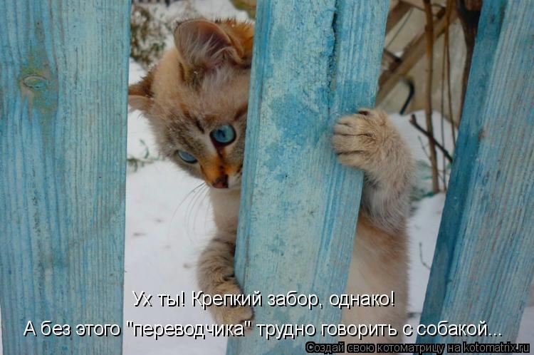 """Котоматрица: Ух ты! Крепкий забор, однако! А без этого """"переводчика"""" трудно говорить с собакой..."""
