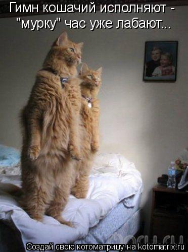 "Котоматрица: Гимн кошачий исполняют -  ""мурку"" час уже лабают..."