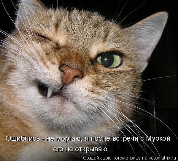 Котоматрица: Ошиблись - не моргаю, я после встречи с Муркой его не открываю...