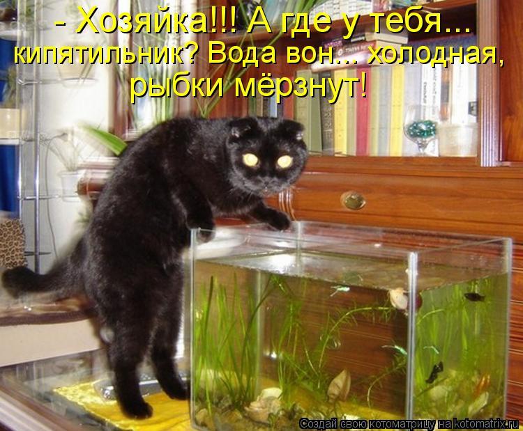 Котоматрица - - Хозяйка!!! А где у тебя... кипятильник? Вода вон... холодная, рыбки