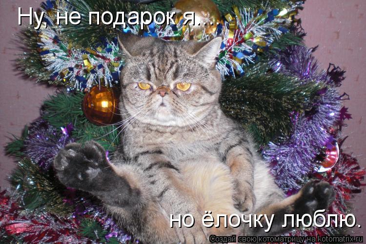 Котоматрица: Ну, не подарок я.... но ёлочку люблю.