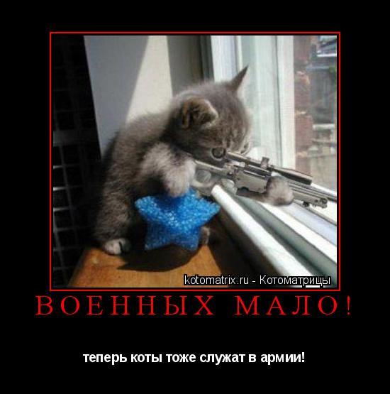 Котоматрица: военных мало! теперь коты тоже служат в армии!