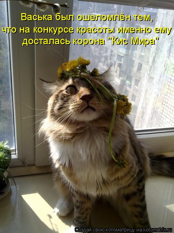"""Котоматрица: досталась корона """"Кис Мира"""" что на конкурсе красоты именно ему Васька был ошеломлён тем,"""