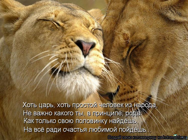 Котоматрица: Хоть царь, хоть простой человек из народа, Не важно какого ты, в принципе, рода.   Как только свою половинку найдёшь, На всё ради счастья любим
