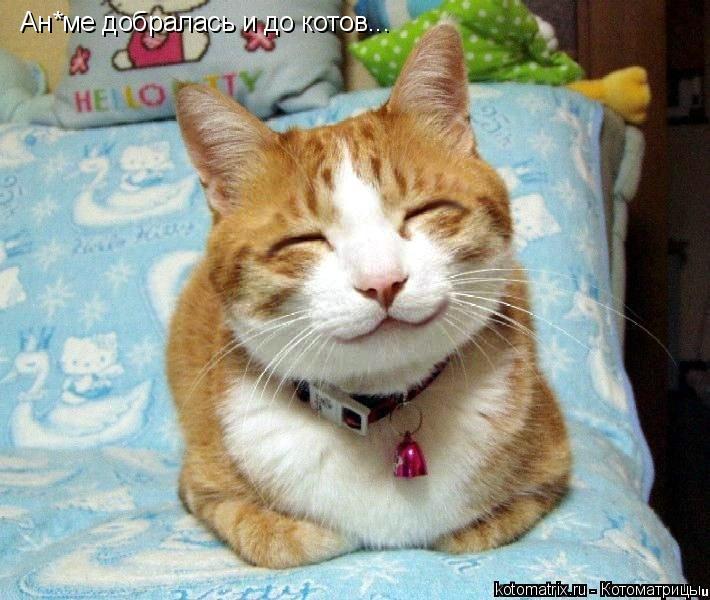 Котоматрица: Ан*ме добралась и до котов...