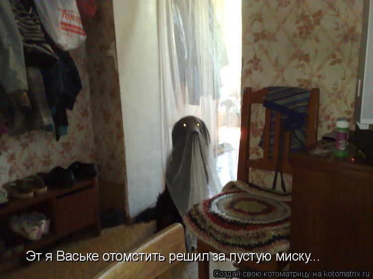 Котоматрица: Эт я Ваське отомстить решил за пустую миску...