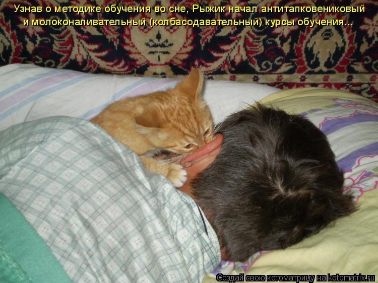 Котоматрица: Узнав о методике обучения во сне, Рыжик начал антитапковениковый и молоконаливательный (колбасодавательный) курсы обучения...