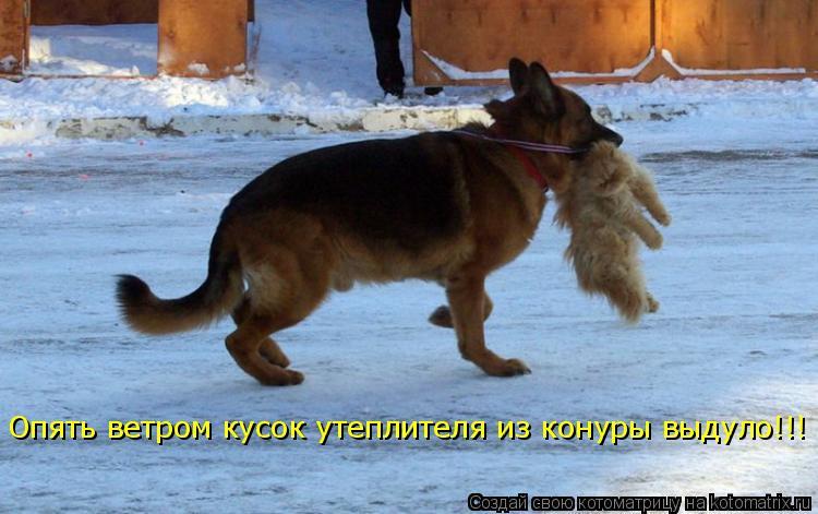 Котоматрица - Опять ветром кусок утеплителя из конуры выдуло!!!