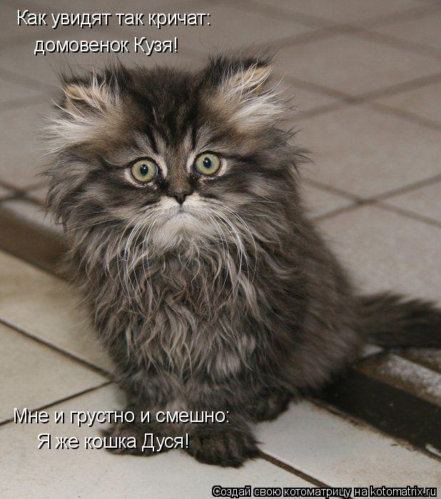 Котоматрица: Я же кошка Дуся! Как увидят так кричат: Мне и грустно и смешно: домовенок Кузя!