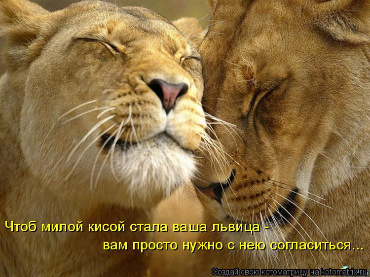 Котоматриця!)))) - Страница 9 1055267