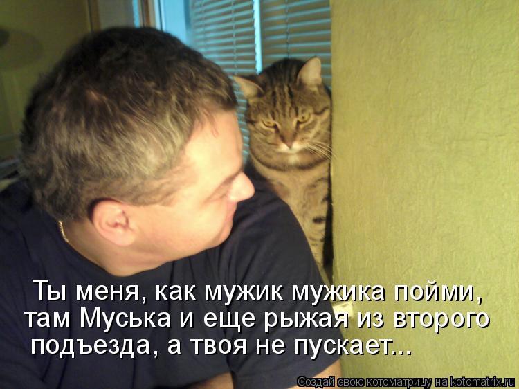 Котоматрица - Ты меня, как мужик мужика пойми, там Муська и еще рыжая из второго под