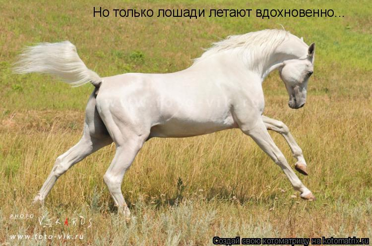 Котоматрица: Но только лошади летают вдохновенно...