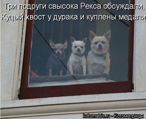 Котоматрица: Три подруги свысока Рекса обсуждали, Куцый хвост у дурака и куплены медали.