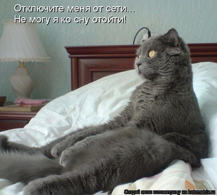 Котоматрица: Отключите меня от сети... Не могу я ко сну отойти!