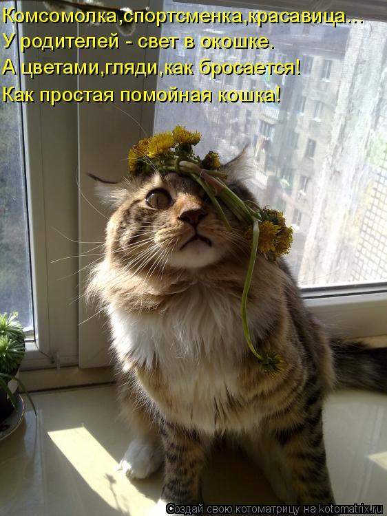 Котоматрица - Комсомолка,спортсменка,красавица... У родителей - свет в окошке. А цве