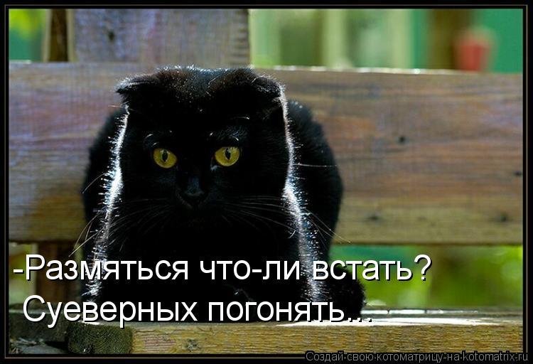 Котоматрица: -Размяться что-ли встать? Суеверных погонять...