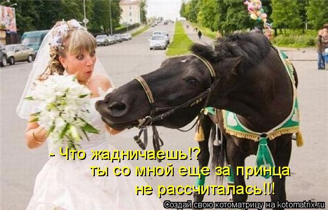 Котоматрица: - Что жадничаешь!? ты со мной еще за принца  не рассчиталась!!!