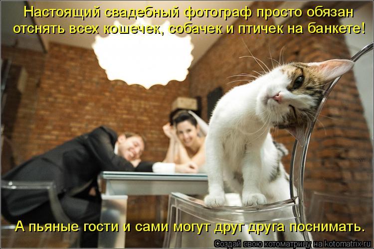 Котоматрица: Настоящий свадебный фотограф просто обязан отснять всех кошечек, собачек и птичек на банкете! А пьяные гости и сами могут друг друга посним