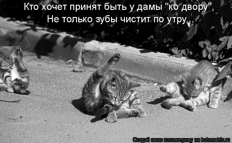 """Котоматрица: Кто хочет принят быть у дамы """"ко двору"""", Не только зубы чистит по утру..."""