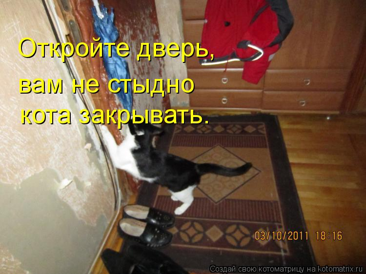 Котоматрица: Откройте дверь, вам не стыдно кота закрывать.
