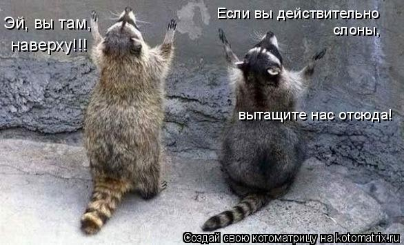 Котоматрица: Эй, вы там,  наверху!!! Если вы действительно  слоны,  вытащите нас отсюда!