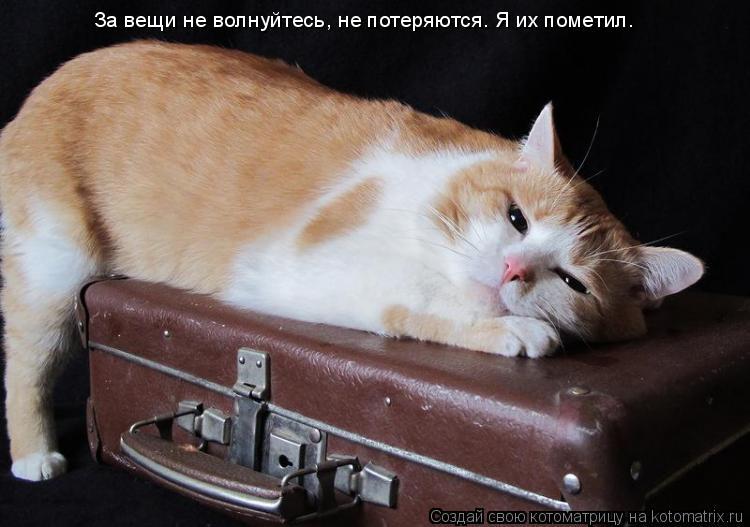Котоматрица: За вещи не волнуйтесь, не потеряются. Я их пометил.