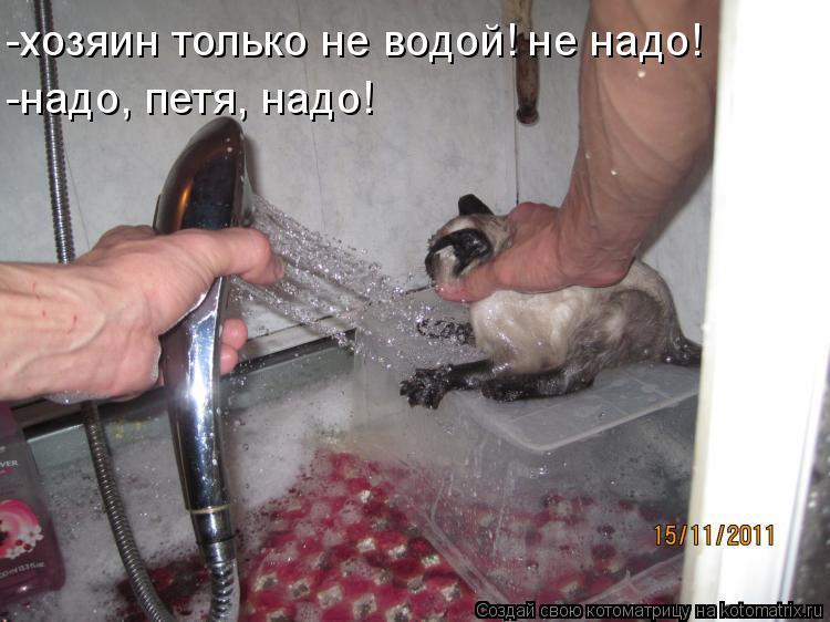 Котоматрица: -хозяин только не водой! не надо! -надо, петя, надо!