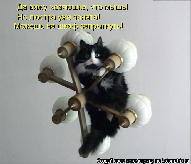 Котоматрица: Да вижу, хозяюшка, что мышь! Но люстра уже занята! Можешь на шкаф запрыгнуть!