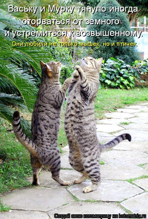 Котоматрица: Ваську и Мурку тянуло иногда  оторваться от земного  и устремиться к возвышенному. Они любили не только мышек, но и птичек.