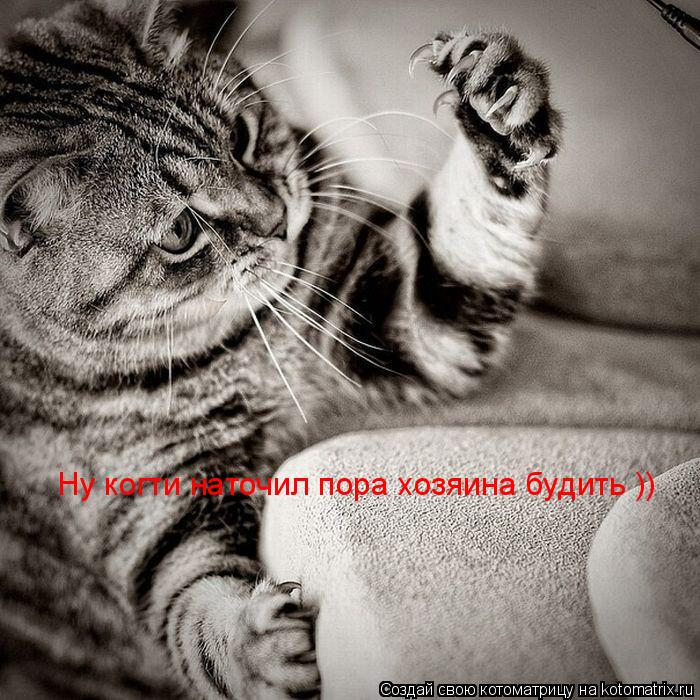 Котоматрица: Ну когти наточил пора хозяина будить ))