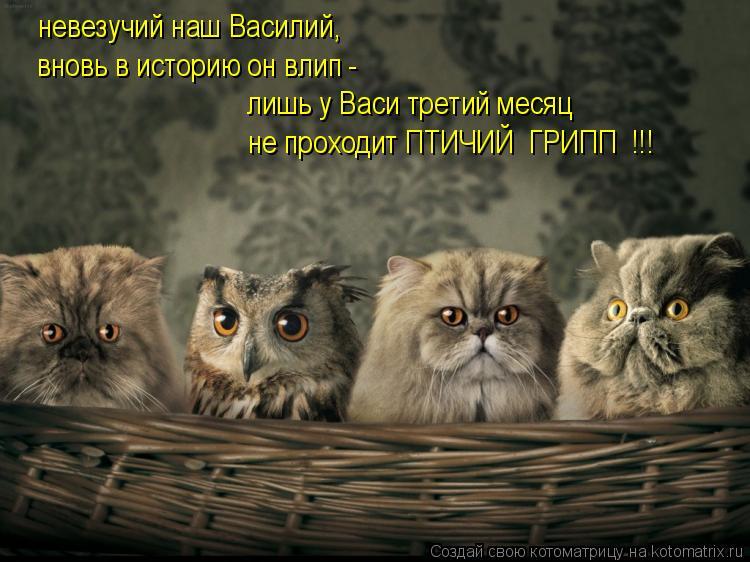 Котоматрица: невезучий наш Василий, вновь в историю он влип - лишь у Васи третий месяц не проходит ПТИЧИЙ  ГРИПП  !!!