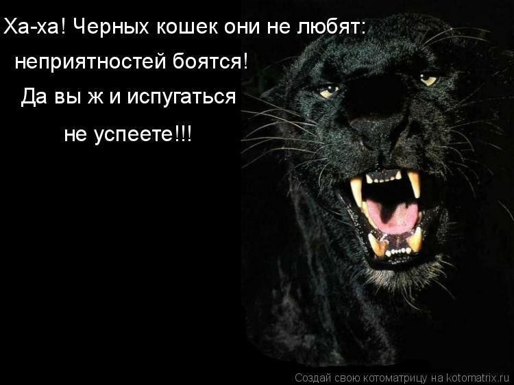 Котоматрица - Да вы ж и испугаться  не успеете!!! неприятностей боятся! Ха-ха! Черны