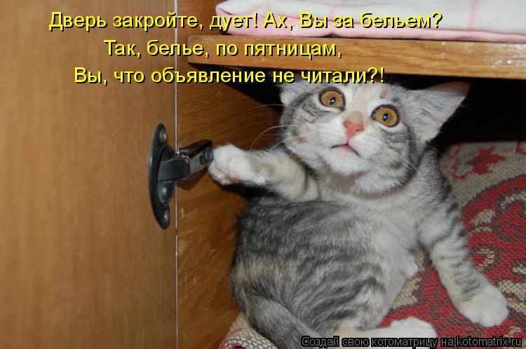 Котоматрица - Дверь закройте, дует! Ах, Вы за бельем? Так, белье, по пятницам,  Вы,