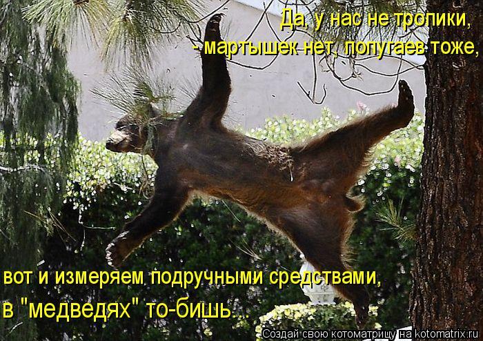 """Котоматрица: Да, у нас не тропики,  - мартышек нет, попугаев тоже, вот и измеряем подручными средствами,  в """"медведях"""" то-бишь..."""