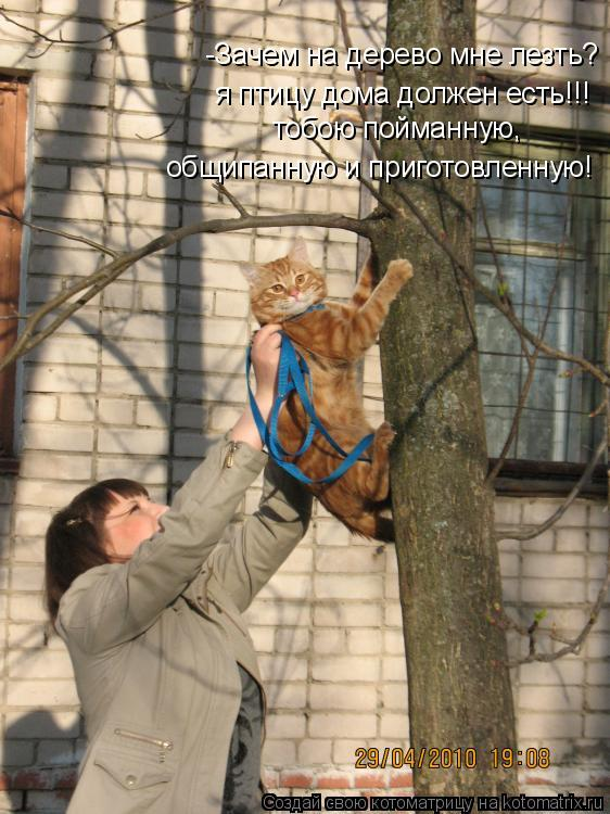 Котоматрица: -Зачем на дерево мне лезть? я птицу дома должен есть!!! тобою пойманную,  общипанную и приготовленную!