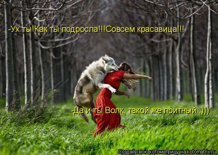 Котоматрица: -Ух ты!Как ты подросла!!!Совсем красавица!!! -Да и ты Волк, такой же притный..)))
