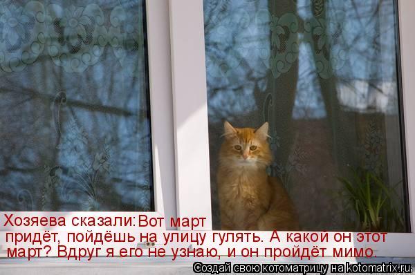 Котоматрица: Хозяева сказали:  Вот март  придёт, пойдёшь на улицу гулять. А какой он этот  март? Вдруг я его не узнаю, и он пройдёт мимо.